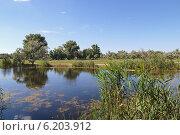 Купить «Зелень по берегам реки», фото № 6203912, снято 28 июня 2014 г. (c) Емельянов Валерий / Фотобанк Лори