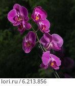 Орхидеи экзотические цветы. Стоковое фото, фотограф Sergey Kiselev / Фотобанк Лори