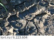 След от покрышки грязный засох на жаре. Стоковое фото, фотограф Галина Карпова / Фотобанк Лори