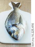 Рыба дорадо. Стоковое фото, фотограф Елена Медведева / Фотобанк Лори