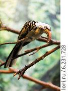 Купить «Red-billed hornbill sitting on tree», фото № 6231728, снято 14 мая 2014 г. (c) Яков Филимонов / Фотобанк Лори