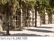 Купить «Montjuic Cemetery in Barcelona», фото № 6240100, снято 20 июля 2014 г. (c) Яков Филимонов / Фотобанк Лори