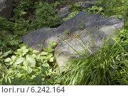 Кусок скальной породы в траве. Стоковое фото, фотограф Сергей Лялин / Фотобанк Лори