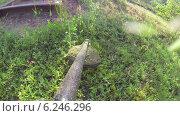 Купить «Газонокосилка», видеоролик № 6246296, снято 6 августа 2014 г. (c) Кекяляйнен Андрей / Фотобанк Лори