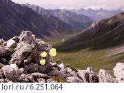 Цветы на перевале. Стоковое фото, фотограф Вероника Денега / Фотобанк Лори