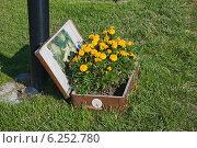 Купить «Цветочный вазон из старого чемодана», эксклюзивное фото № 6252780, снято 1 августа 2014 г. (c) Александр Щепин / Фотобанк Лори