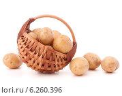 Купить «Potato tuber in wicker basket isolated on white background», фото № 6260396, снято 31 октября 2013 г. (c) Natalja Stotika / Фотобанк Лори