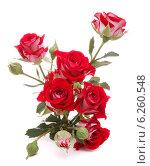Купить «Red rose flower bouquet isolated on white background cutout», фото № 6260548, снято 21 июня 2013 г. (c) Natalja Stotika / Фотобанк Лори