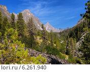 Горный лес в Восточных Саянах. Стоковое фото, фотограф Виктор Никитин / Фотобанк Лори