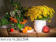 Купить «Пижма», фото № 6262504, снято 20 июля 2014 г. (c) Колесникова Алёна Валерьевна / Фотобанк Лори