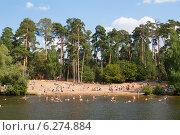 Купить «Вид на пляж в Серебряном бору в Москве», фото № 6274884, снято 3 августа 2014 г. (c) Михаил Грушин / Фотобанк Лори