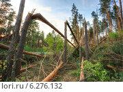 Деревья, поваленные ураганом около дороги в лесу. Стоковое фото, фотограф g.bruev / Фотобанк Лори