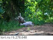 Купить «Любопытный кот, доской сфинкс, бродит по лесу», фото № 6278648, снято 29 июля 2014 г. (c) Кекяляйнен Андрей / Фотобанк Лори
