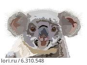 Купить «Медведь коала на белом  фоне», иллюстрация № 6310548 (c) Веснинов Янис / Фотобанк Лори