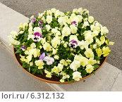 Купить «Желтые анютины глазки в вазоне для цветов на улице», фото № 6312132, снято 5 июня 2012 г. (c) Наталия Журавлёва / Фотобанк Лори