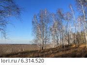 Купить «Поздняя осень в Западной Сибири», эксклюзивное фото № 6314520, снято 9 ноября 2013 г. (c) Анатолий Матвейчук / Фотобанк Лори