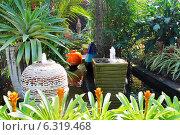 """Тропический сад """"Нонг Нуч"""", Таиланд (2013 год). Стоковое фото, фотограф Павлова Дарья / Фотобанк Лори"""