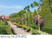 """Сад орхидей """"Нонг Нуч"""" (2013 год). Редакционное фото, фотограф Павлова Дарья / Фотобанк Лори"""