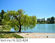 Дерево. Стоковое фото, фотограф Nuridin Kaliyev / Фотобанк Лори