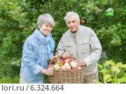Купить «Счастливые пожилые супруги с полной корзиной спелых яблок в саду», фото № 6324664, снято 25 августа 2014 г. (c) Юлия Кузнецова / Фотобанк Лори