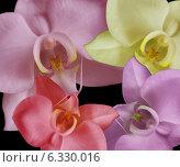 Четыре орхидеи разного цвета на черном фоне. Стоковое фото, фотограф ангелина кочугуева / Фотобанк Лори