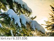 Купить «Заснеженный лес. Снег на сосновых ветвях, закат», фото № 6331036, снято 19 января 2014 г. (c) Екатерина Овсянникова / Фотобанк Лори