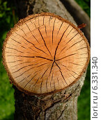 Пенек на дереве. Стоковое фото, фотограф Irina / Фотобанк Лори