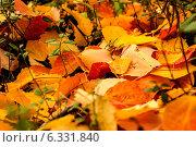 Осенний фон из листьев. Стоковое фото, фотограф Виталий Исаев / Фотобанк Лори