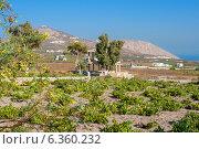 Виноградник. Остров Санторини, Греция (2010 год). Стоковое фото, фотограф Andrei Nekrassov / Фотобанк Лори