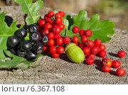 Купить «Дары осени на пне в лесу», эксклюзивное фото № 6367108, снято 5 сентября 2014 г. (c) Елена Коромыслова / Фотобанк Лори