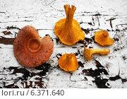 Купить «Осенние грибы - лисички (Chanterelle) и Волнушка (лат. Lactarius torminosus) на старой деревянной поверхности», фото № 6371640, снято 13 сентября 2013 г. (c) ElenArt / Фотобанк Лори