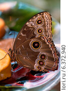 Купить «Close-up of a butterfly at Butterfly Palace, Branson, Taney County, Missouri, USA», фото № 6372940, снято 19 октября 2018 г. (c) Ingram Publishing / Фотобанк Лори