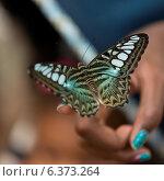 Купить «Butterfly perching on a person's finger at Butterfly Palace, Branson, Taney County, Missouri, USA», фото № 6373264, снято 25 августа 2019 г. (c) Ingram Publishing / Фотобанк Лори