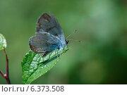 Купить «Butterfly on a leaf», фото № 6373508, снято 16 июля 2019 г. (c) Ingram Publishing / Фотобанк Лори