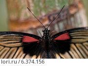 Купить «Close-up of a butterfly at Butterfly Palace, Branson, Taney County, Missouri, USA», фото № 6374156, снято 19 октября 2018 г. (c) Ingram Publishing / Фотобанк Лори