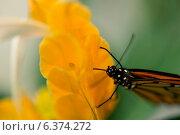 Купить «Close-up of a butterfly on flower at Butterfly Palace, Branson, Taney County, Missouri, USA», фото № 6374272, снято 25 августа 2019 г. (c) Ingram Publishing / Фотобанк Лори