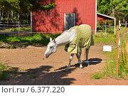 Купить «Породистая лошадь в смешной попоне», фото № 6377220, снято 20 августа 2014 г. (c) Валерия Попова / Фотобанк Лори