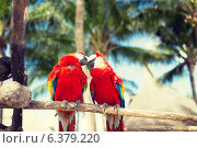 Купить «couple of red parrots sitting on perch», фото № 6379220, снято 6 февраля 2014 г. (c) Syda Productions / Фотобанк Лори