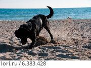 Купить «A dog on the beach», фото № 6383428, снято 22 февраля 2019 г. (c) Ingram Publishing / Фотобанк Лори