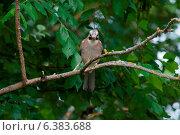 A jay on a branch. Стоковое фото, агентство Ingram Publishing / Фотобанк Лори