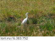 Купить «A egret in a field», фото № 6383752, снято 26 марта 2019 г. (c) Ingram Publishing / Фотобанк Лори