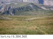 Табун диких лошадей в горах (2014 год). Редакционное фото, фотограф Максим Кожушко / Фотобанк Лори
