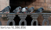 Купить «Pigeons perching on the railings, St. Petersburg, Russia», фото № 6386856, снято 9 декабря 2019 г. (c) Ingram Publishing / Фотобанк Лори