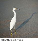 Купить «Egret on the beach, Sayulita, Nayarit, Mexico», фото № 6387032, снято 26 марта 2019 г. (c) Ingram Publishing / Фотобанк Лори