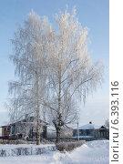 Береза, запорошенная снегом в деревне (2010 год). Стоковое фото, фотограф Александр Антонников / Фотобанк Лори