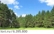 Купить «Облака движутся над лесом. Таймлапс», видеоролик № 6395800, снято 23 июля 2014 г. (c) Михаил Коханчиков / Фотобанк Лори