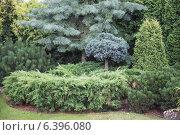 Купить «Элементы ландшафтного дизайна в оформлении сада. Хвойные растения», фото № 6396080, снято 15 августа 2014 г. (c) Gagara / Фотобанк Лори