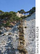 Купить «Скалистый горный склон, покрытый соснами на вершине», фото № 6403624, снято 23 августа 2014 г. (c) Емельянов Валерий / Фотобанк Лори
