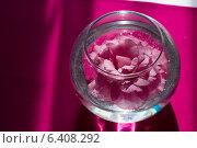 Цветок розы в вазе с водой на столе. Стоковое фото, фотограф Наталья Слюсаренко / Фотобанк Лори
