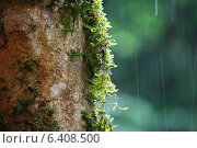 Мох на дереве под дождем. Стоковое фото, фотограф Дмитрий К / Фотобанк Лори